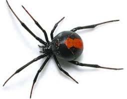 Örümcek İlaçlama Servisi