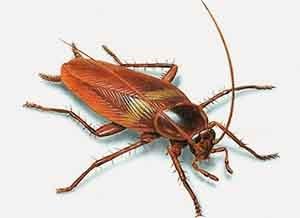 Ekonomik Böcek İlaçlama