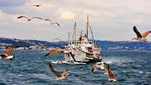 İstanbul Fare İlaçlama