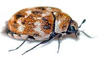 Uyuz Böceği İlaçlama
